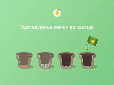лимон 1