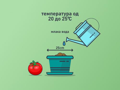 2 домат